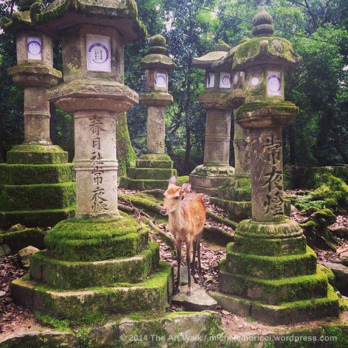 Nara-Giappone-Michele-Moricci-16