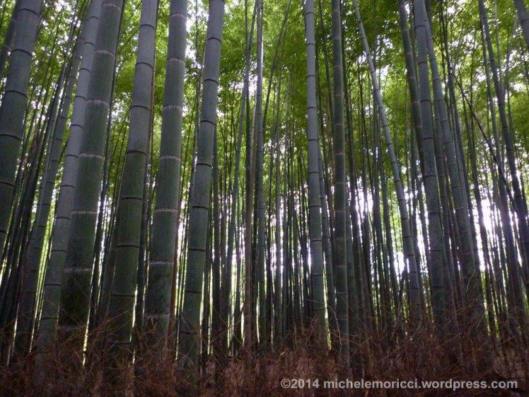 Kyoto-Michele-Moricci-1